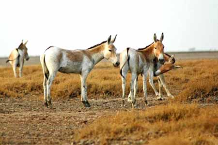 kavir5 پارک ملی کویر مرکزی
