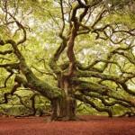 3624451 845 150x150 جالبترین درختان دنیا