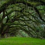 3624455 924 150x150 جالبترین درختان دنیا