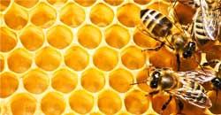 عسل معجزهای به نام «عسل»