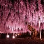 3624449 455 150x150 جالبترین درختان دنیا