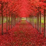 3624452 921 150x150 جالبترین درختان دنیا