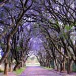 3624453 500 150x150 جالبترین درختان دنیا