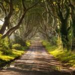 3624454 764 150x150 جالبترین درختان دنیا